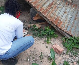 Polícias e Apase resgatam animais vítimas de maus-tratos na Chapada Diamantina
