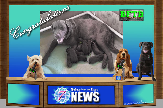 BFTB NETwoof News with Glory's Puppies