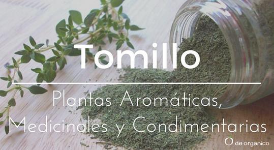 el-tomillo-aromatico-medicinal-y-condimento
