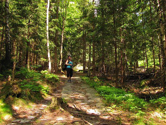 Świerkowy las.