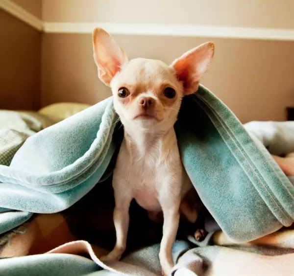 The last 5 of the most famous types of small dogs in the world Cat and dogs | cat and dogs