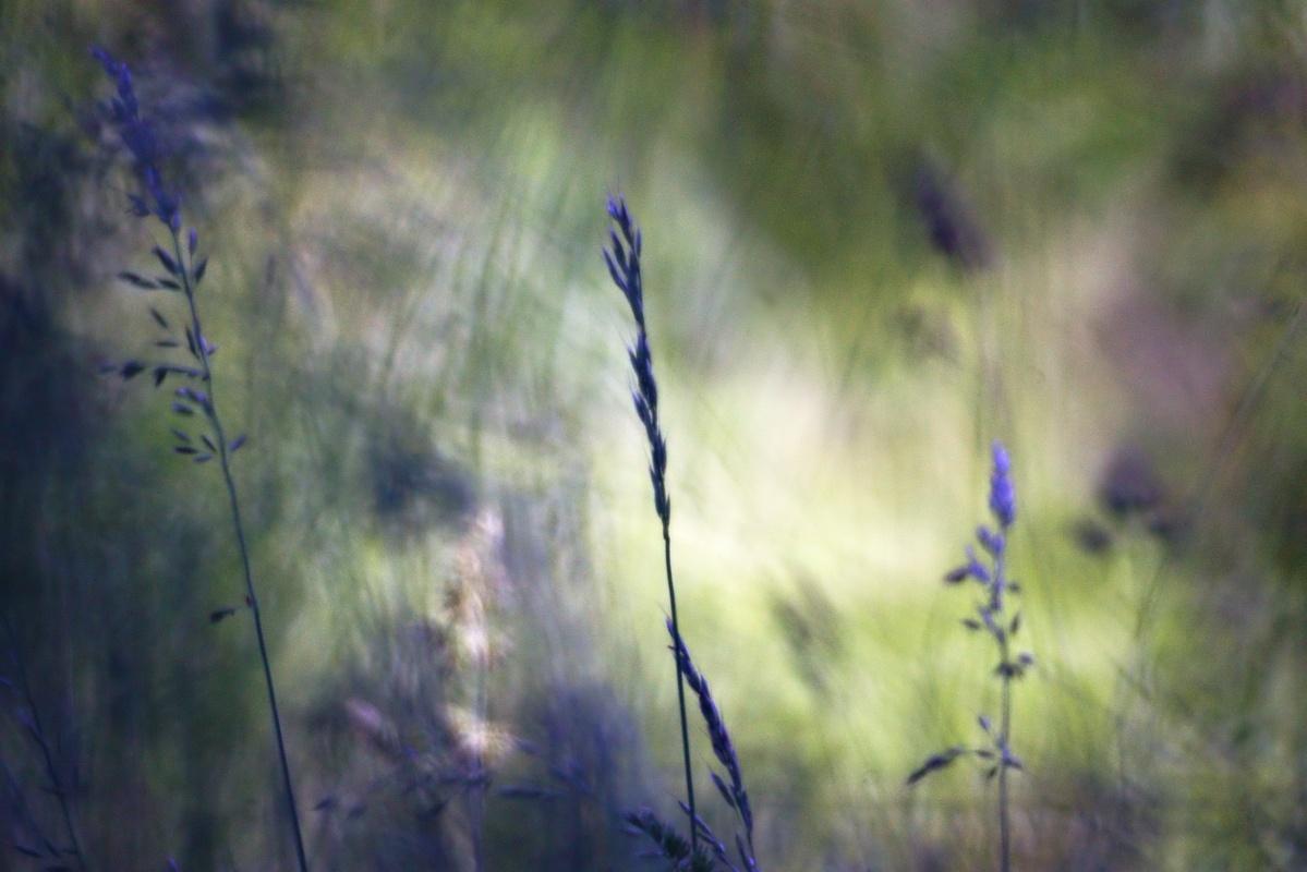 Bild der Woche #22 (KW22/2020) – Freigestelltes Gras