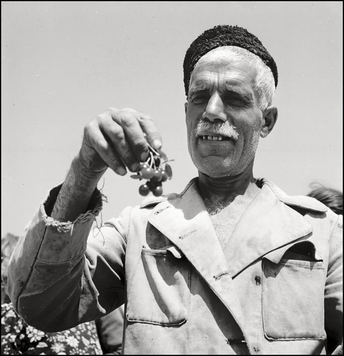 Крымскотатарский торговец черешней, 1943 год