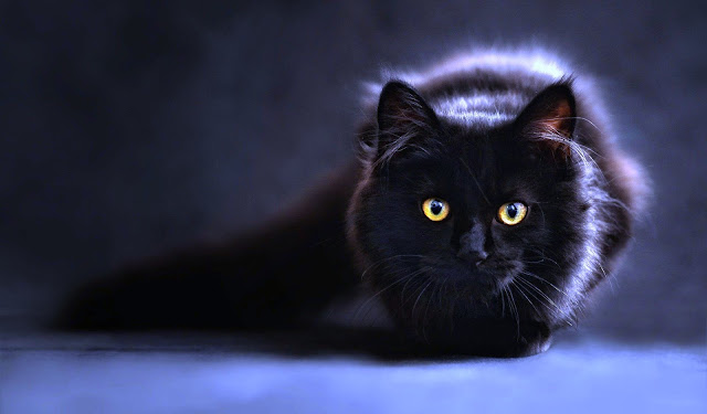 Arti Mimpi Kucing Hitam Di Berbagai Keadaan