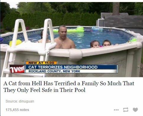 Funny news show headline