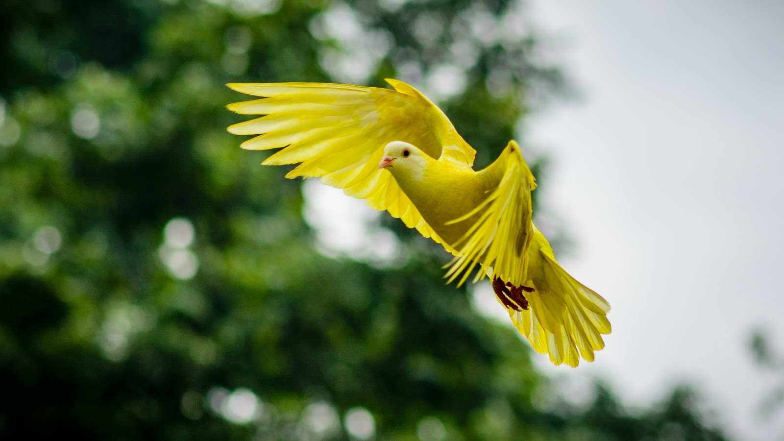 yellow-avian-bird-bright-images