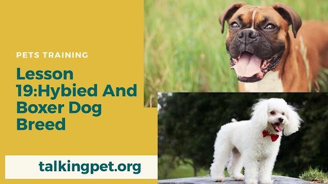 Hybrid And Boxer Dog Breeds