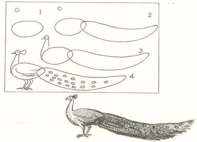 cara mudah menggambar hewan secara bertahap dilengkapi