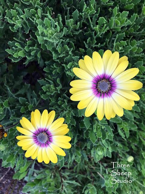 Beautiful Blooming Plant