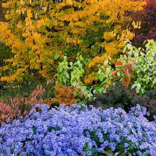 Descubriendo el otoño en los Jardines de Wisley en 15 fotos