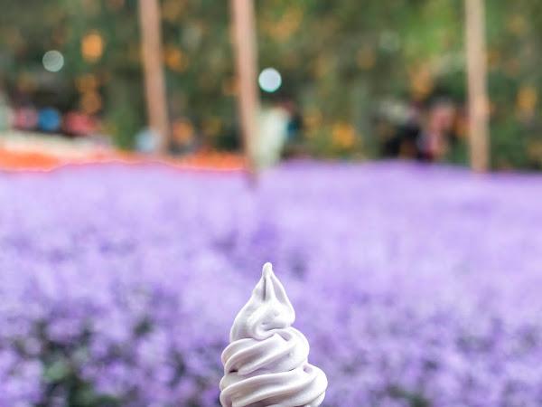 Lavender Garden @ Cameron Highlands, Pahang