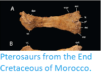 https://sciencythoughts.blogspot.com/2018/12/pterosaurs-from-end-cretaceous-of.html