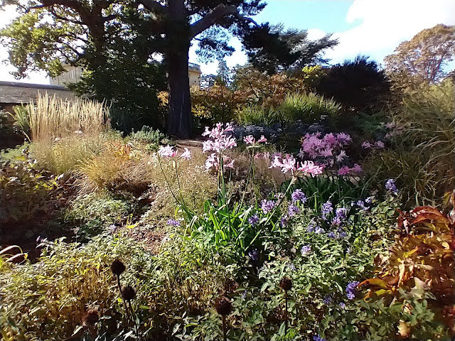 Beautiful light in the herbaceous borders at Exbury gardens