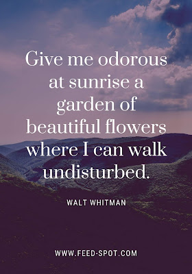 Give me odorous at sunrise a garden of beautiful flowers where I can walk undisturbed. __ Walt Whitman