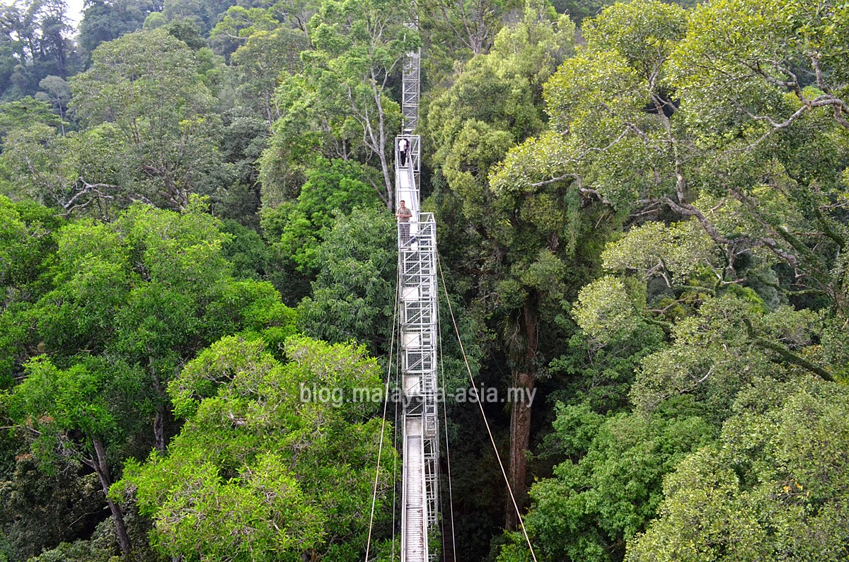 Bird Watching in Ulu Temburong National Park