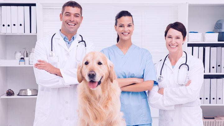 are veterinarians essential services