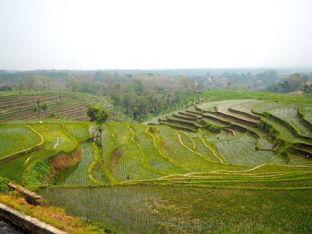 Rice terraces near Seloliman village, East Java, Indonesia