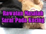 Rawatan Masalah Saraf Pada Kucing