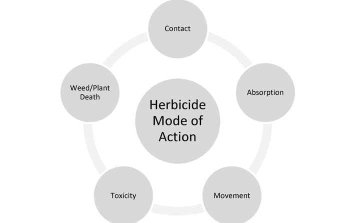 Modes of Herbicide Actions