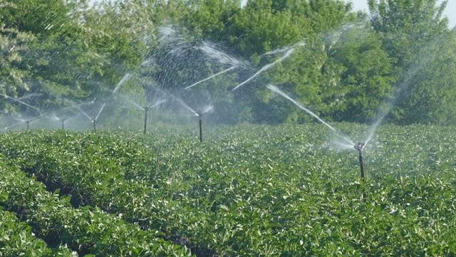 Pentingnya Perencanaan Sistim Irigasi Dan Penampungan Air Pada Perkebunan Kentang