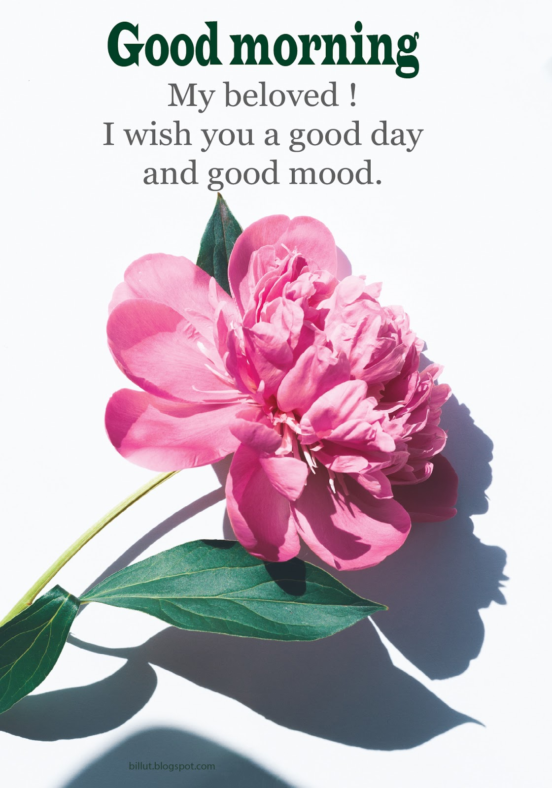 Good Morning Wishes Message Good Morning Greeting Sms Quotes