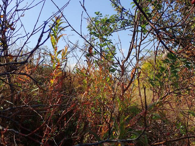 Rośliny w październiku zaczynają już nabierać jesiennego kolorytu