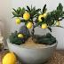 Limon Muabbeti