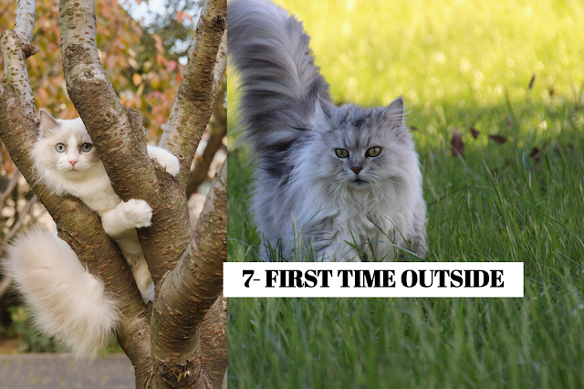 Make sure your cat is confident in the home before letting it out for the first time, and when you do, supervise its first few trips outside. Open the door, step into the yard, and call it gently, maybe waving a feather-stick toy to encourage it to come out. Do not force your cat outside; it will go when it feels ready. *NERVOUS CAT Cats like being in control of their territory, so being faced with a vast expanse of outdoor space might be daunting at first. They may display fearful behavior, slinking around very close to the ground. *EXPLORING Cats are natural-born explorers, and the nooks and crannies in your yard will provide them with hours of fun.