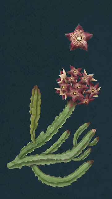 Botanical illustration for a museum