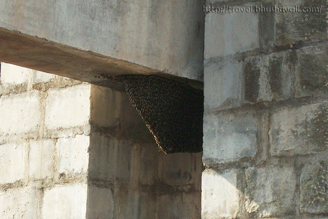 Honeybee comb on Noyyal River Dam in Muthur, Erode