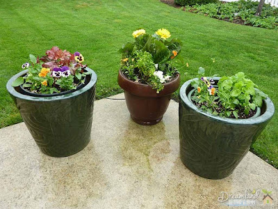 5 Tips For Container Gardening