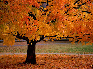 Amazing Autumn HD 3D Wallpaper