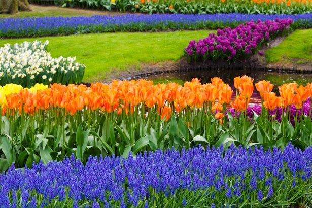 Springtime flower scene