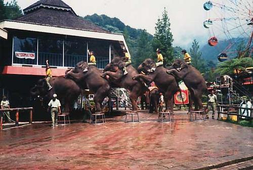 Taman Wisata Way Kambas, Lampung Timur
