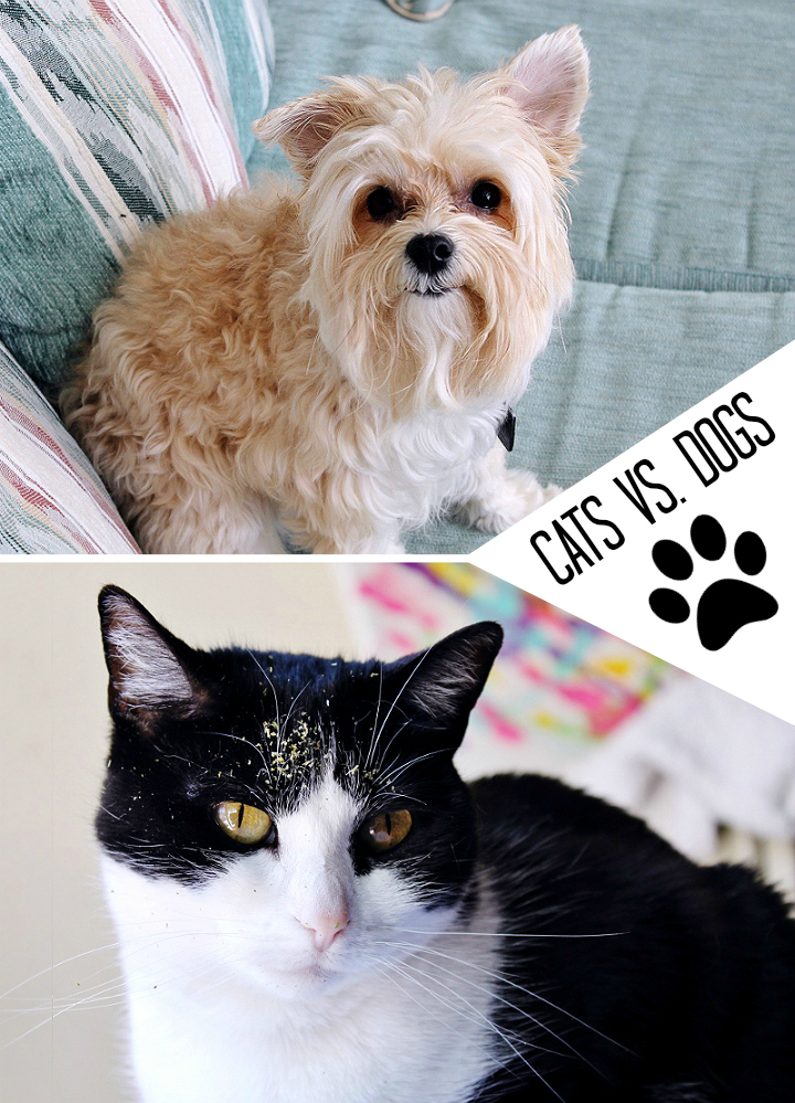 Which causes more mischief? We weigh in! #NewPetNoStains AD