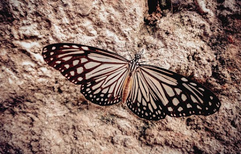 Beautiful Butterfly HD Wallpaper Free Stock Image [ Download ]