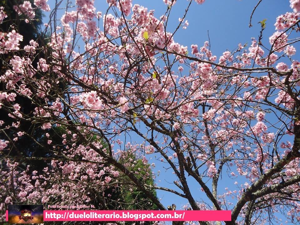 01 Parque das Cerejeiras Campos do Jordão 39a Festa da Cerejeira