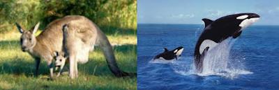 hayvanlar ne zaman doğurur