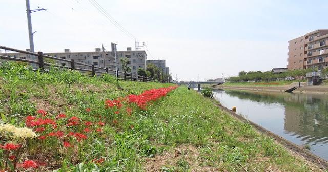 彼岸花の咲く川辺