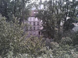 Montmartre Vue par des interstices au travers des plantes des squares et des jardins.