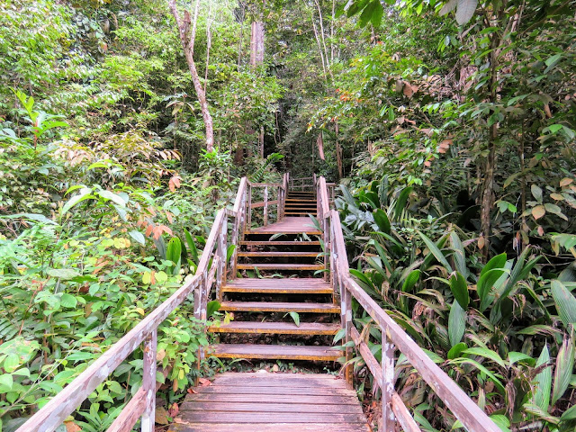Hiking trail at MacRitchie Reservoir in Singapore
