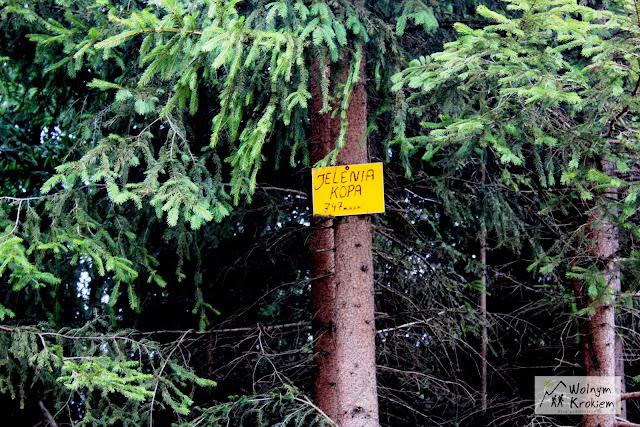 Jelenia Kopa 734 Góry bardzkie