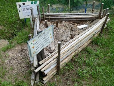 花博記念公園鶴見緑地 落ち葉の堆肥