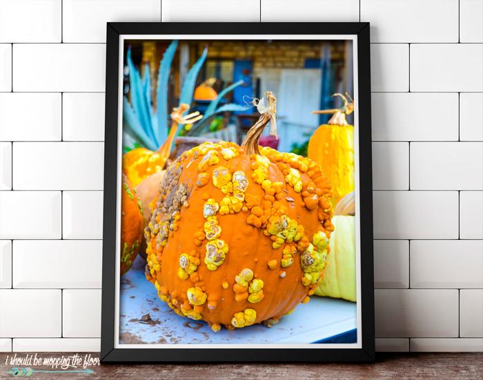Framed Fall Photography