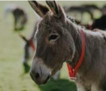 10 lines on donkey