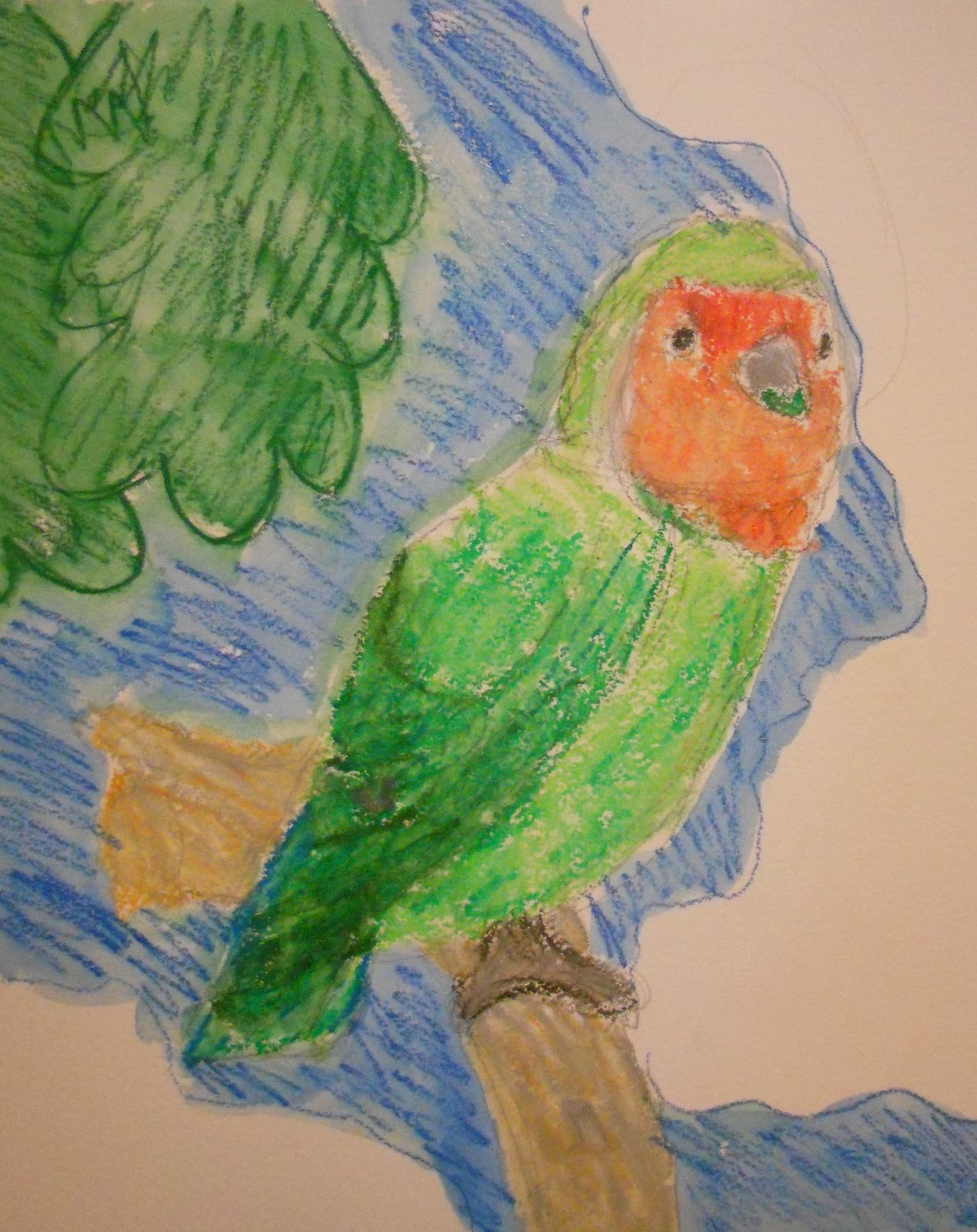 Create Art With Mrs P Peach Faced Lovebird In Oil Pastels