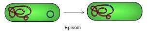 EPISOM