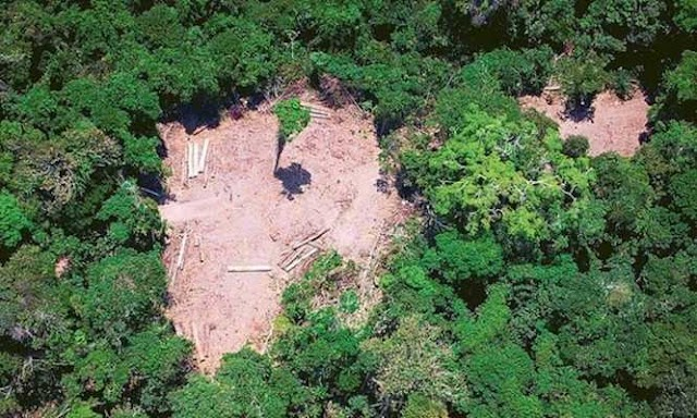 Alemanha reage ao desmatamento e suspende financiamento de R$ 155 milhões para projetos de preservação da Amazônia