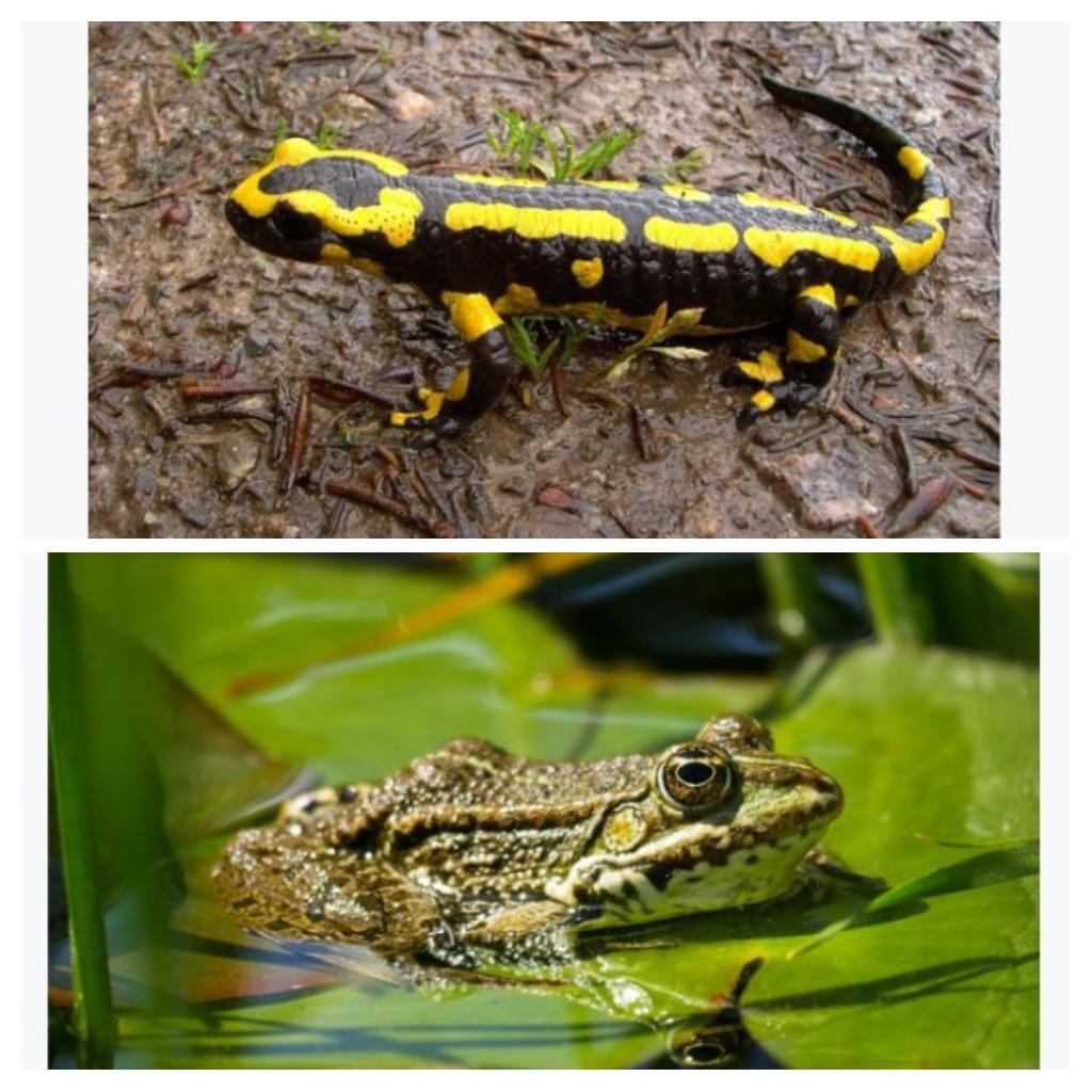 Pengertian Kingdom Animalia (hewan), hewan avertebrata ...
