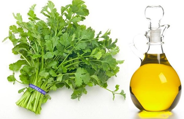 What are the benefits of coriander oil for the body
